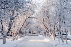 Härlig vinterstadsgränd på en solig dag, träd i snön arkivbild