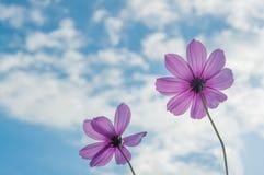 Härlig violett blomma Arkivfoto