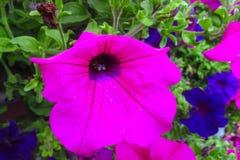 Härlig violett blomma arkivbild
