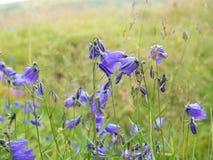 Härlig violett blomma framme av suddigt gräs Arkivfoton