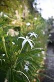 Härlig vit blomma fotografering för bildbyråer