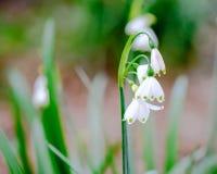 Härlig vit blomma med grunt djup av fältet Royaltyfri Fotografi