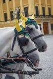 Härlig vit ekipagetradition, i Wien, Österrike arkivfoto
