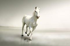 Härlig vit häst i rörelse Arkivfoto