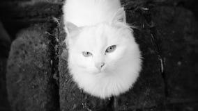härlig vit katt som poserar för kameran arkivfoto