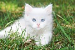 Härlig vit kattunge i parken. fotografering för bildbyråer