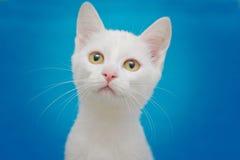 Härlig vit kattunge med gula ögon arkivfoto