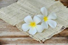 Härlig vit plumeriablomma på trätabellen Royaltyfri Bild