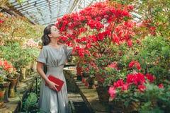 Härlig vuxen flicka, i en läsning och att drömma för azaleaväxthus i en härlig retro klänning arkivbild