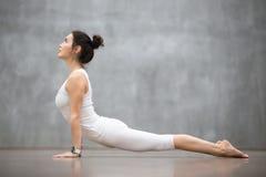 Härlig yoga: Den uppåtriktade belägen mitt emot hunden poserar Arkivbilder