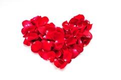 härliga älskvärda petals Royaltyfri Foto
