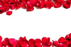 härliga älskvärda petals Royaltyfri Fotografi
