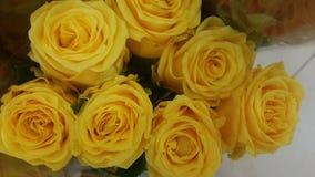 Härliga älskvärda sammetslena nya gula rosor Arkivfoto