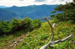 Härliga alaskabo berg och landskap i sommartid Royaltyfri Foto