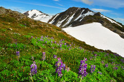 Härliga alaskabo berg och landskap i sommartid Royaltyfria Foton
