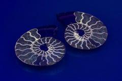 Härliga ammonit skivade i halva och polerat för att exponera de fantastiska färgrika kammarna under UV arkivfoton
