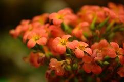 Härliga apelsinblommor Royaltyfri Bild