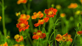 Härliga apelsinträdgårdblommor arkivbild
