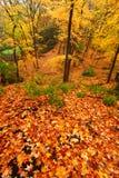 Härliga Autumn Illinois Landscape Arkivfoton