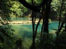 Härliga Azure Pools av Semuc Champey till och med träd Arkivbild