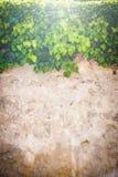 Härliga bakgrundsväggar och växter Royaltyfri Bild