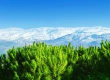 härliga berg Royaltyfri Fotografi