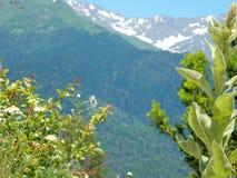 Härliga bergväxter Royaltyfria Bilder