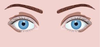 härliga blåa ögon Royaltyfri Foto