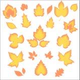 härliga bladguld Arkivbild