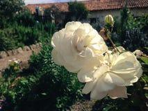 Härliga blom Arkivbilder