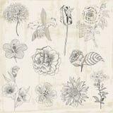 Härliga blom- beståndsdelar vektor illustrationer
