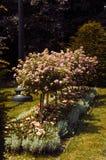 Härliga blom- dekorativa träd i vår parkerar Royaltyfri Foto