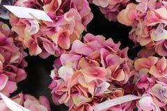 Härliga blom- rosa färger Arkivbilder