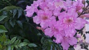 Härliga blommadetaljer Arkivfoto
