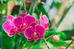 Härliga blommande orkidér i skog Royaltyfri Bild