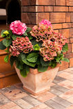 Härliga blommasammansättningar på farstubron av träcountren Royaltyfri Foto