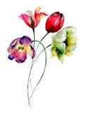 härliga blommatulpan Royaltyfria Bilder