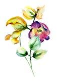 härliga blommatulpan Arkivfoto