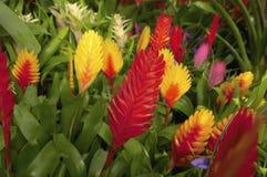 Härliga blommaväxter Royaltyfri Fotografi