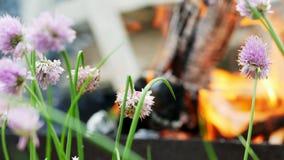 Härliga blommor är bränna, och vissna nära branden från gallret, bränner vedträt i bakgrunden lager videofilmer