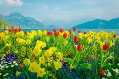 Härliga blommor över sjön Lucerne och bergbakgrund i Schweiz Royaltyfri Foto