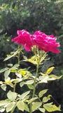 härliga blommor Arkivbild