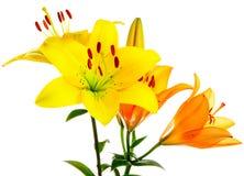 härliga blommor royaltyfria bilder