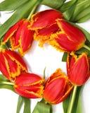 härliga blommor Royaltyfri Fotografi