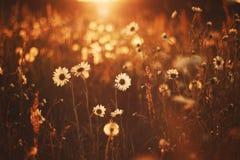 härliga blommor Arkivbilder