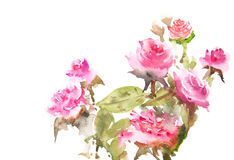härliga blommor Royaltyfria Foton