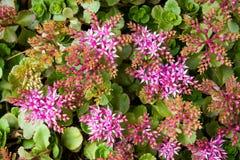 härliga blommor Royaltyfri Foto