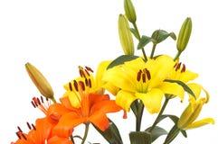härliga blommor royaltyfri bild