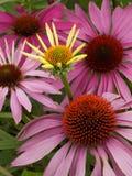Härliga blommor 10 Royaltyfri Foto