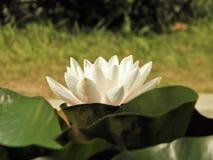 Härliga blommor av den bosatta världen royaltyfri foto